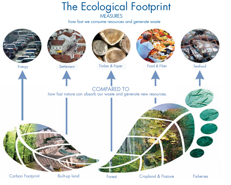 Ecological Footprint infographic